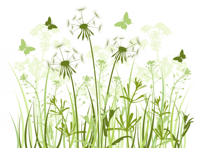 Photo Wallpaper Dandelions and butterflies 60740 additionalImage 1
