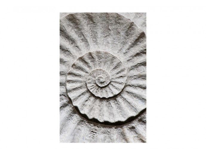 Wall Mural Shell 96680 additionalImage 1