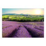 Fotomural decorativo Lavender Field 127991 additionalThumb 1