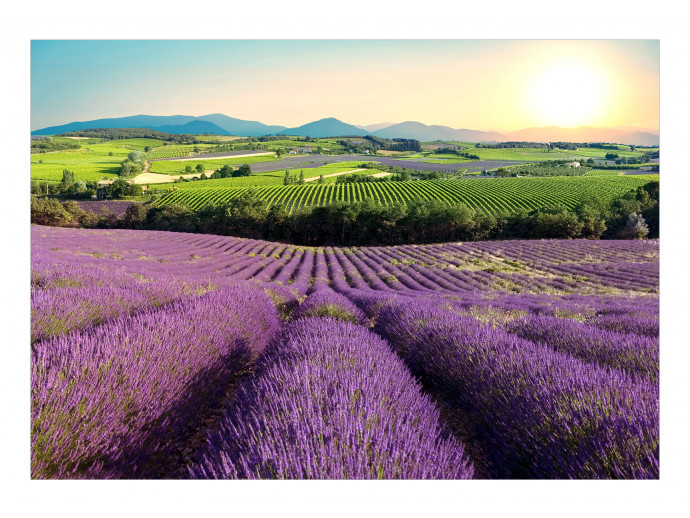 Fotomural decorativo Lavender Field 127991 additionalImage 1