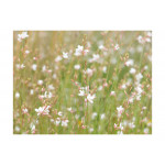 Photo Wallpaper White delicate flowers 60472 additionalThumb 1