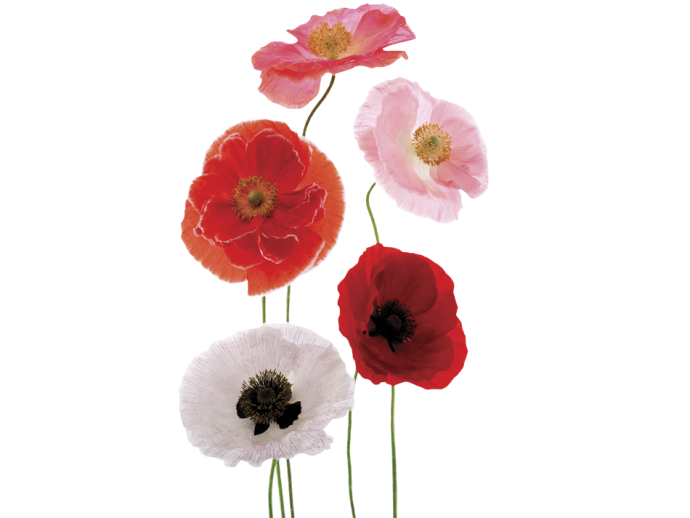 Wall sticker Sublime fragrances: multicolored poppies 90792