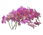 Wall mural Bunch of flowers - orchid 91003