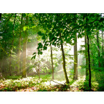 Photo Wallpaper Forest - summer 60564 additionalThumb 1