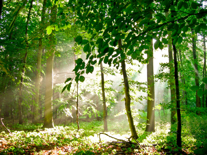 Photo Wallpaper Forest - summer 60564 additionalImage 1