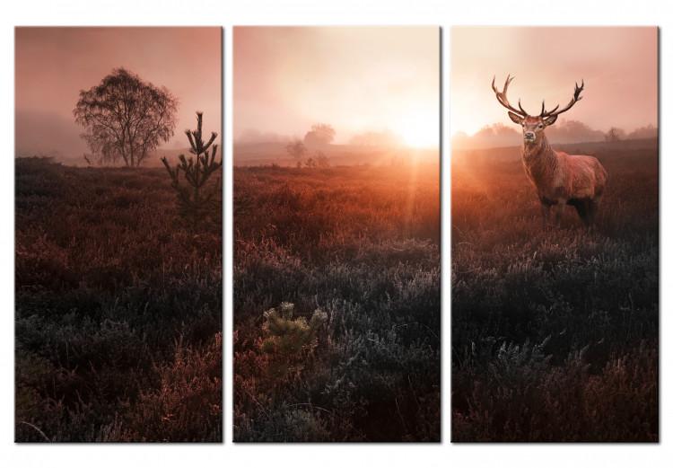 Deer in the Sunshine I