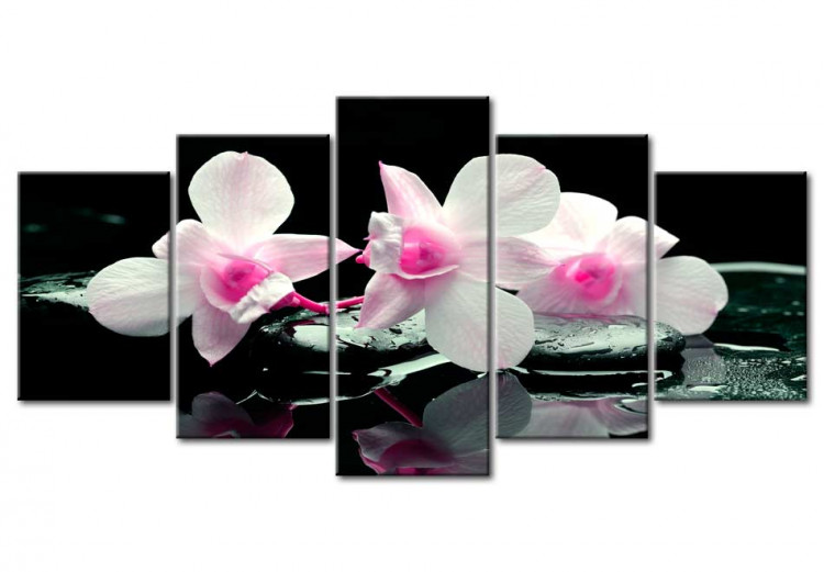 Rest of orchids