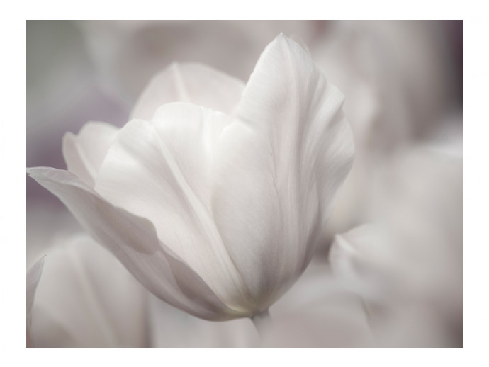 Photo Wallpaper Tulip - black and white photo 60346 additionalImage 1