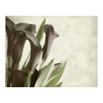Photo Wallpaper Dark purple calla lilies - old paper background  60456 additionalThumb 1