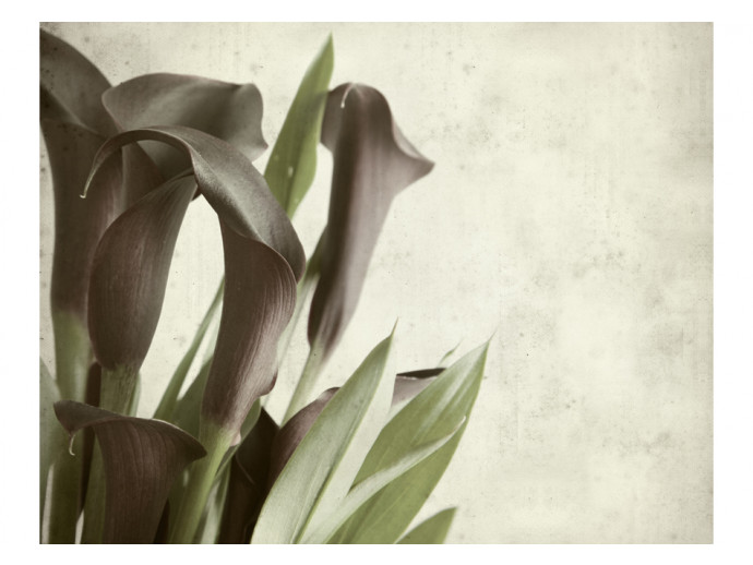 Photo Wallpaper Dark purple calla lilies - old paper background  60456 additionalImage 1