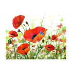 Fotomural decorativo Country poppies 60656 additionalThumb 1