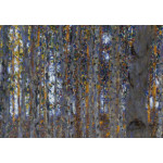 Art Reproduction Beech Forest I 52237 additionalThumb 3