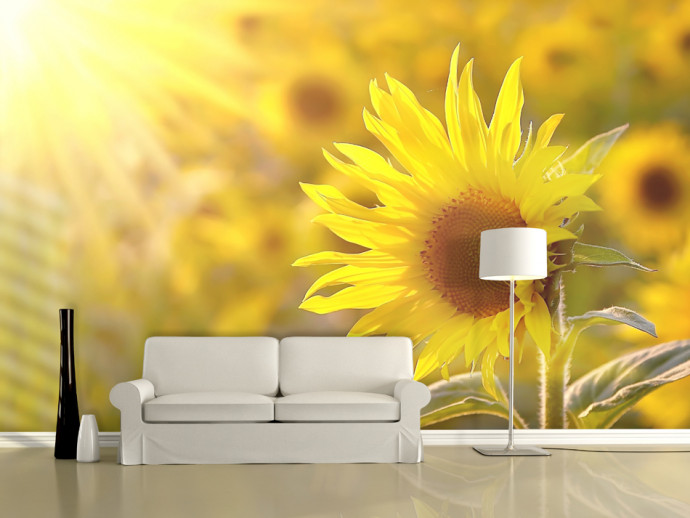 Wall Mural Sunflowers bathing in the summer sun 60737