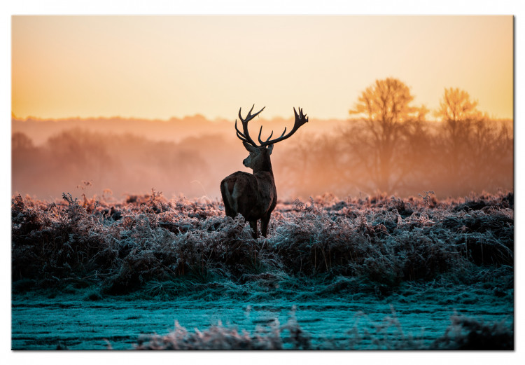 Frosted Field
