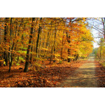 Photo Wallpaper Forest 60577 additionalThumb 1