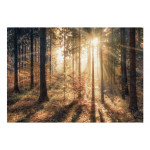 Wall Mural Autumnal Forest 92897 additionalThumb 1