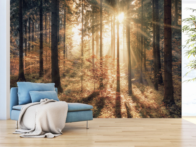 Wall Mural Autumnal Forest 92897