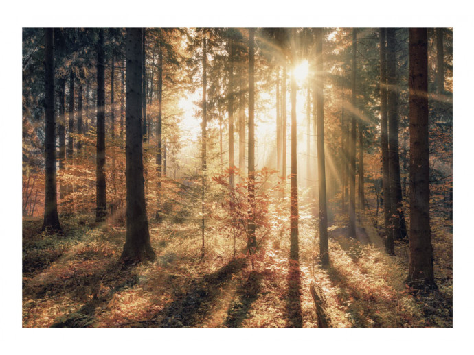 Wall Mural Autumnal Forest 92897 additionalImage 1