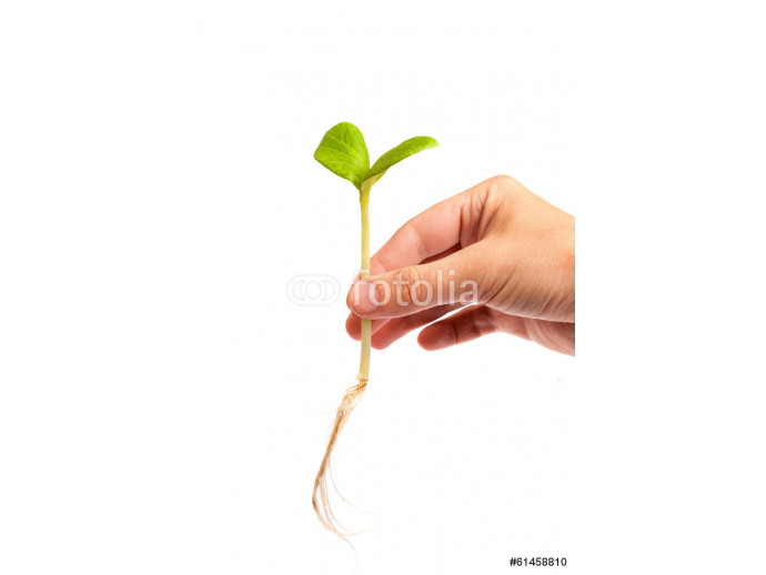 Male hand hold a small sprout and an earth handful 64238