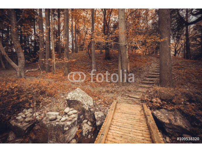 Autumn forest / Fall in forest. Beautiful autumn forest vintage fade filter 64238
