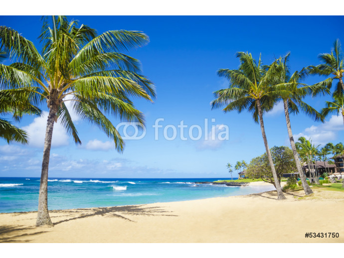 Palm trees on the sandy beach in Hawaii 64238