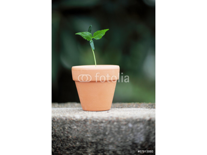 Young plant - New life 64238