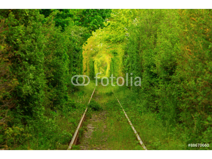 Tunnel -like path covered with bushes and trees with light at the end 64238