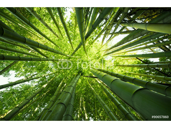 Green bamboo nature backgrounds 64238