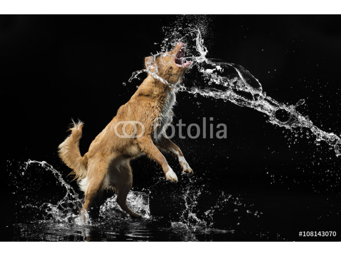 dog on black background with water 64238