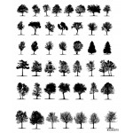 trees isolated on white background 64238