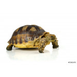 turtle isolated on white background 64238