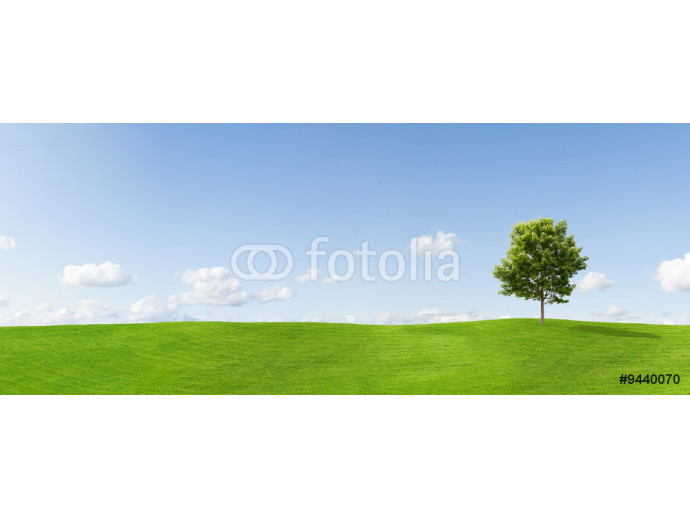 Panorama of a maple tree on a meadow against a blue sky 64238