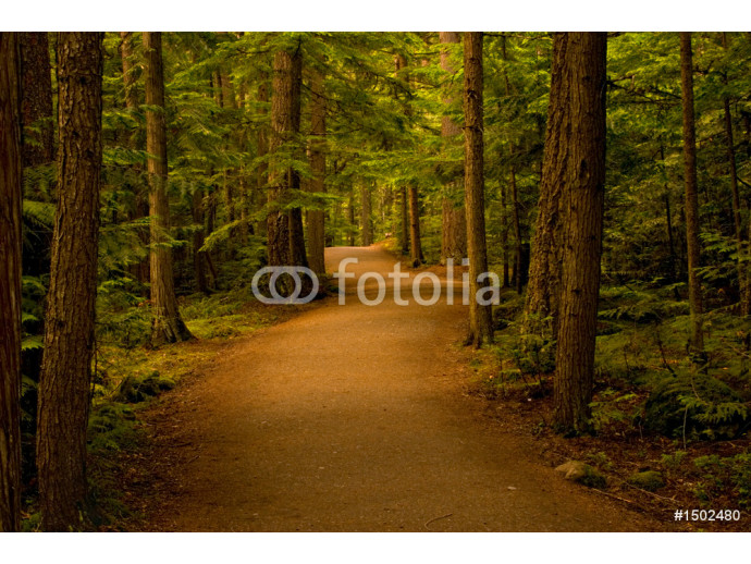 path in the forest/woods 64238