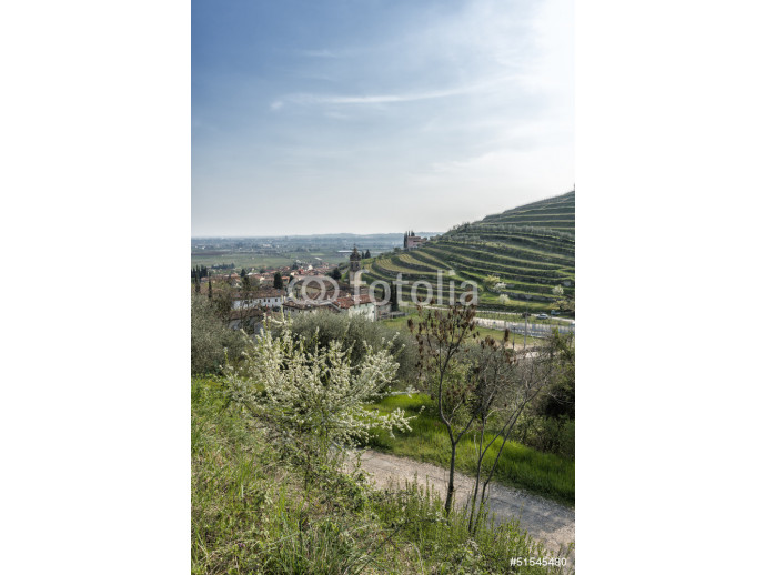 Panoramic view the vineyards in the Valpolicella 64238