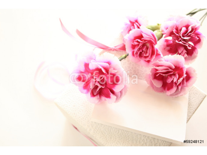 Pink and white bicolor carnation on white background  64238
