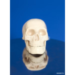 Human skull model on blue background 64238