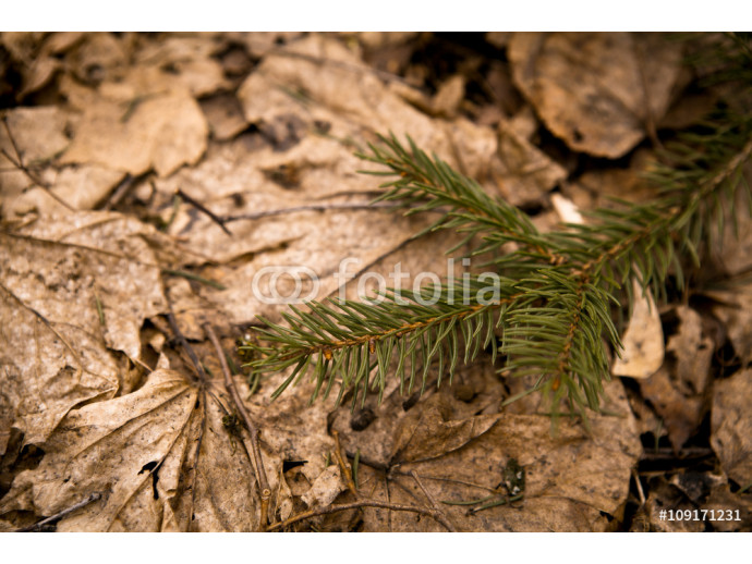 Fur-tree branch on a background of dry fallen leaves 64238