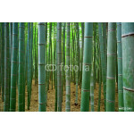 Bamboo forest 64238