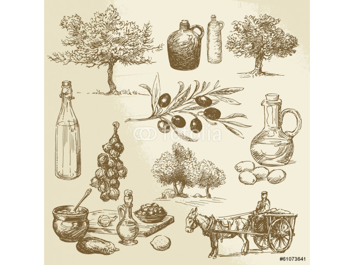 harvest and olive product - hand drawn collection 64238