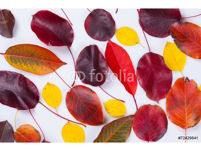 collection beautiful colorful autumn leaves 64238