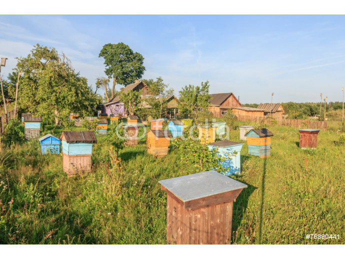 Farm bee-garden with multicolor beehouses 64238