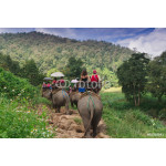 Group tourists to ride on an elephant in forest Chiang mai, Thailand 64238