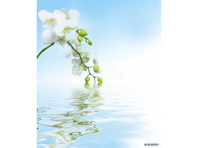 Beautiful white orchid flowers reflected in water 64238