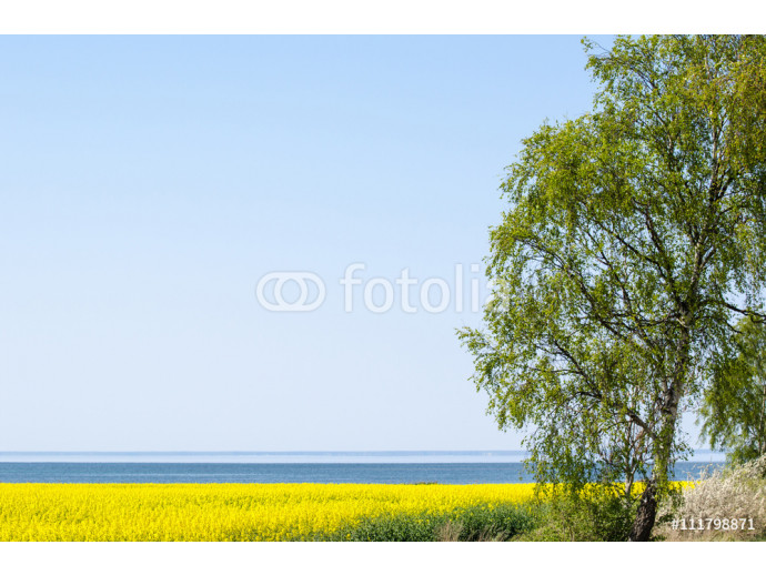 Photo wallpaper Spring by a coastal field 64238