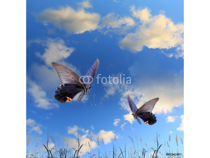 Butterfly and beautiful sky and cloud 64238