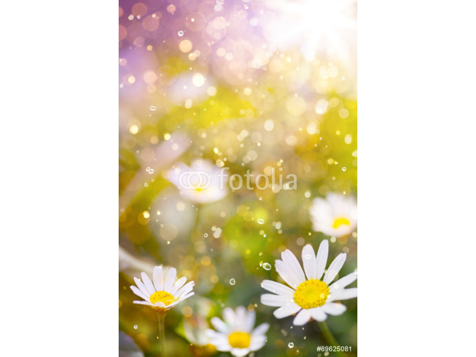 Art Beautiful floral border beautiful blurred background 64238