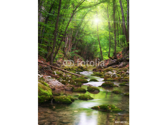 Wallpaper River deep in mountain forest 64238