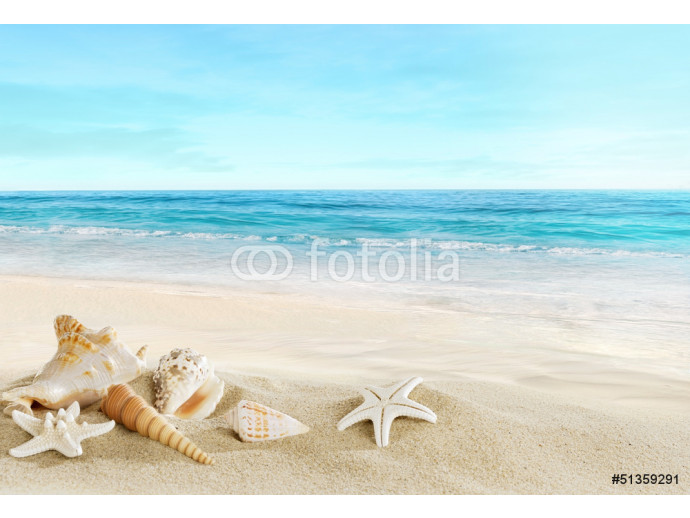 Landscape with shells on tropical beach 64238