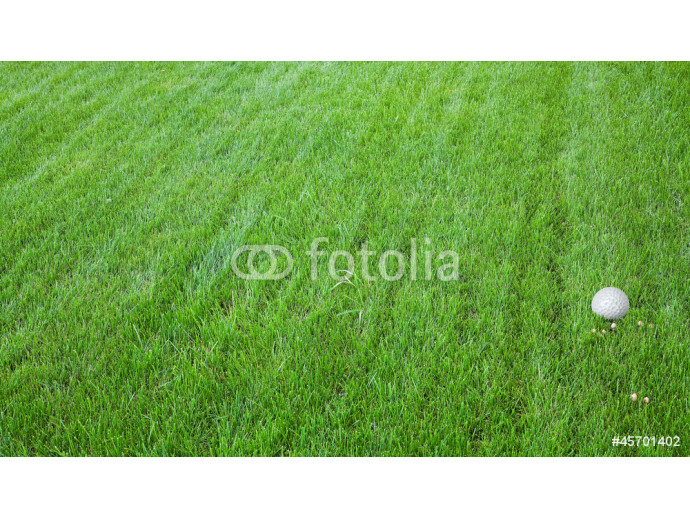Green grass with litlle mushrooms and golf ball 64238