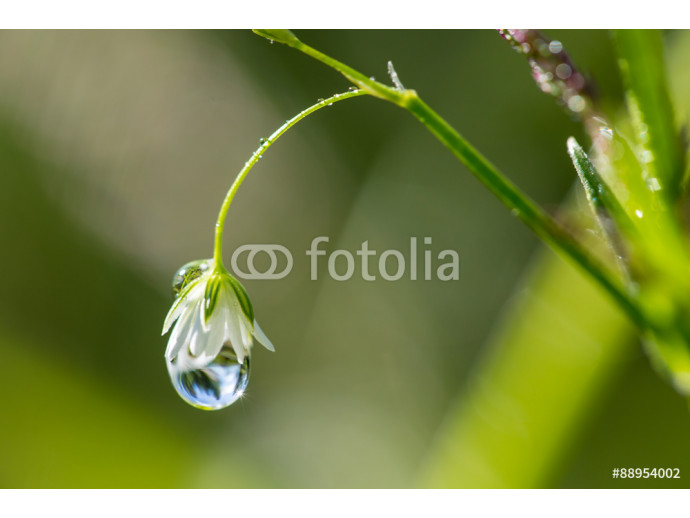 Water drop and flower 64238